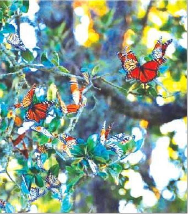 Butterflies, bats, crickets and humming birds