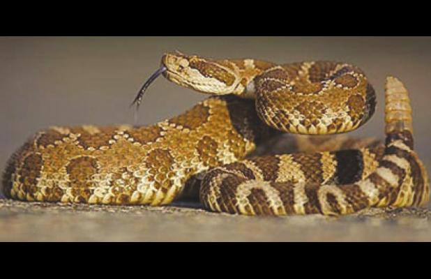 Texas snakes are on the move