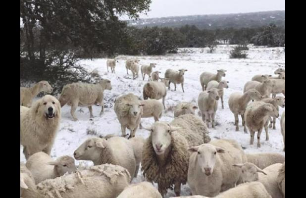 Rocksprings survives Winter Weather 2021