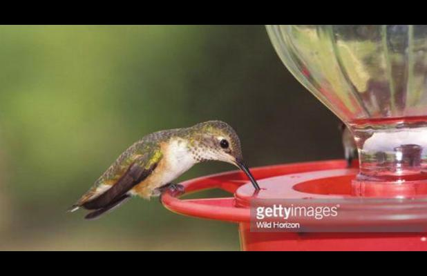 Spring is the time to put out hummingbird feeders