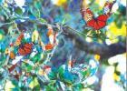 Butterflies, bats, crickets and humming birds